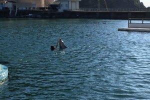 Grand bassin des dauphins