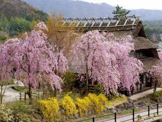 A aldeia também tem belas vistas para o Mt. Fuji em dias de céu limpo