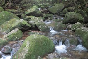 Amazing scenery on the Yakushima Traverse