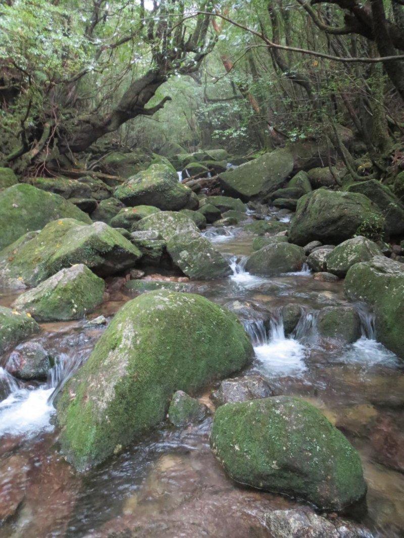 Великолепные пейзажи на якусимской тропе