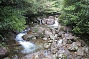 Amazing scenery on the Yakushima Traverse hike