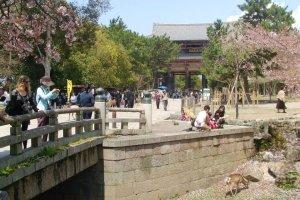 En arrivant vers la Grande Porte Sud (Nandai-mon)