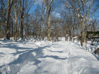 O único som que se ouvia era eu a caminhar pelos caminhos entre as árvores