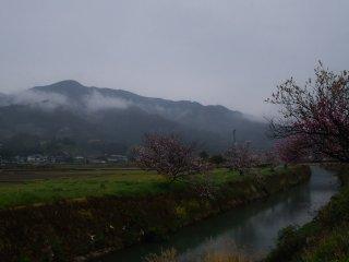 生比奈は桜と雛飾りでも有名な集落