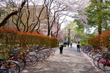 Springtime on campus with many students hurrying to their next class and some ambling along leisurely