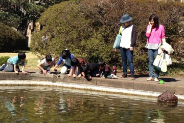 Young mothers and children have fun looking for the fish in university's pond
