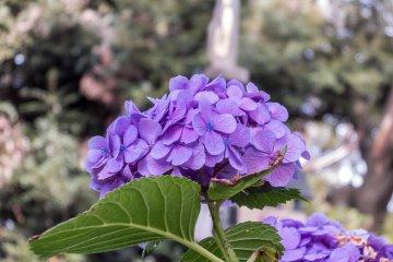Considerando su pequeño tamaño, el parque Nogeyama tiene muchos tipos de flores