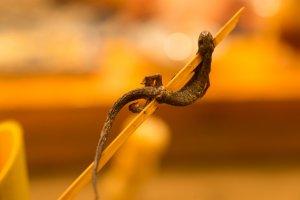 Grilled salamander