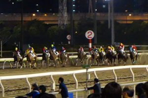 As the team of horses and desperate jockeys round the corner, the crowd sits up a little straighter and grip their bet slips a little tighter