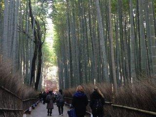 غابة البامبو، احدى أبرز معالم أراشييما الرائعة