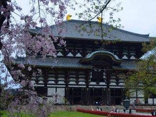 Ngôi đền chính Todaiji nơi ở của Daibutsu