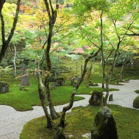 The Beauty of Fukuoka's Moss Temple