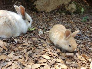 ลูกกระต่ายน่ารัก