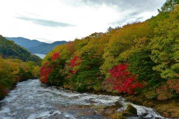 유카와 강을 따라 아름다운 색깔의 변화가 시작된다