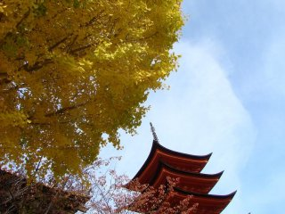 yellow ginko leaves in front of pagoda