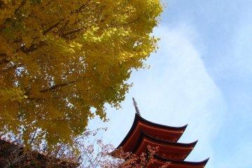 宝塔前的银杏树