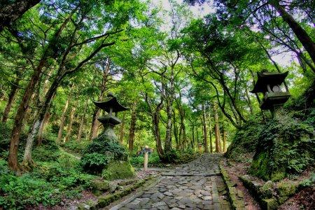 Petualangan Gunung Daisen Tottori
