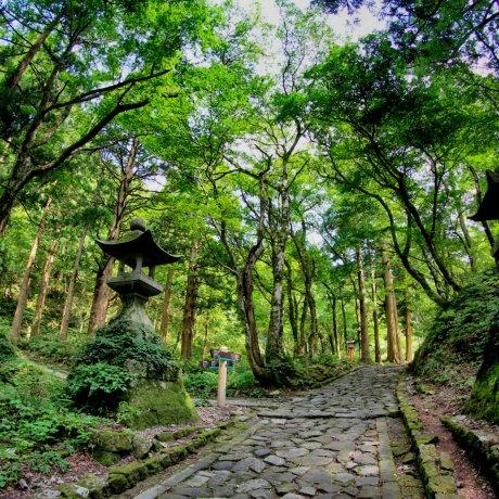 Cuộc phiêu lưu ở Tottori núi Daisen