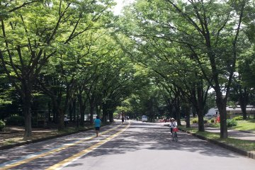<p>The jogging course in summer under the beautiful Zelkova trees in the park.</p>