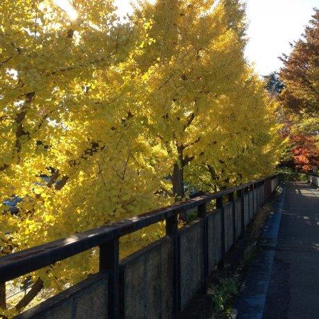 Komazawa Olympic Park in Four Seasons