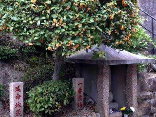 """Источающая приятный аромат """"киммокусэй"""" - пахучая олива, на входе в храм"""