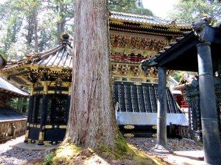 Nikko's jumble