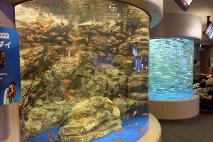 The tall fish tank