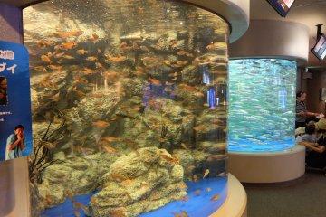 高聳的魚缸