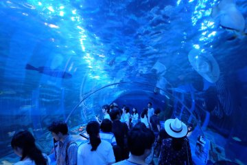 A Nice Day Out at Shinagawa Aquarium