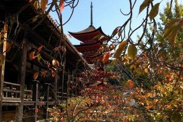 Senjo-kaku and Goju-no-to Pagoda
