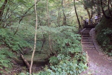 There are various paths that wind through the trees to the different lakes and ponds.