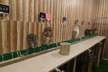 Owls on display