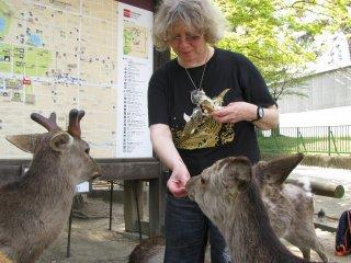 Rusa di Nara sangat mengagumkan dan saya dengan senang hati memberi mereka makan!