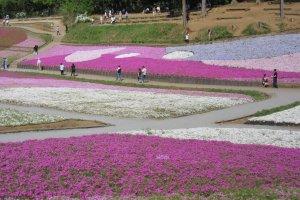 Можно представить масштаб цветочных полей!