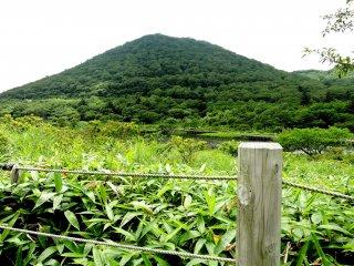 Bambu anão junto à vedação