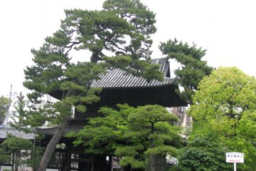 Сосны храма Сэнгакудзи