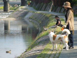 Con đường ven bờ sông Kamo là nơi đi dạo yêu thích của cư dân Kyoto