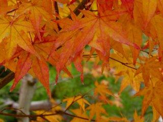 Warna-warni musim gugur