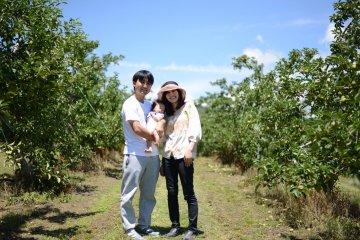 Apple Picking in Matsumoto