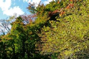 あずまやの近くにある木橋