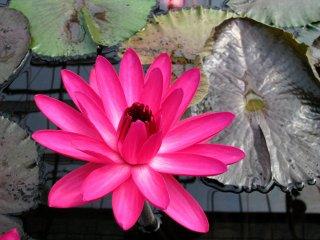 مشرقة جداً حتى باللون الزهري