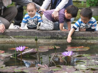 Boys enjoyed watching small fish in the pond