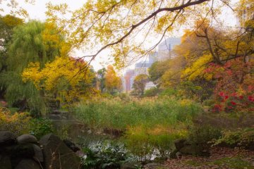 Hibiya Park is beautiful in autumn
