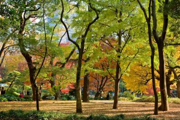 Trees in the center of Tokyo!