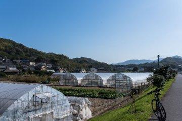 Farmland on Innoshima Island