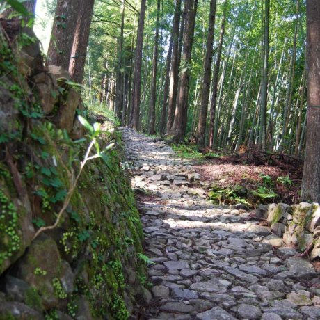 "Kumano Kodo-The ""Way of St. James"" of Japan"