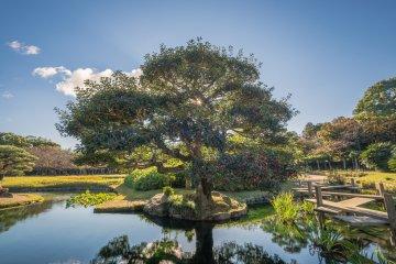 The morning sun shines through a tree in the garden
