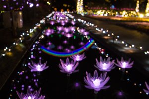 The gorgeous and intricate lotus lights