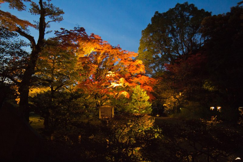 As soon as you enter the gardens, you are greeted by fantastic autumn leaves