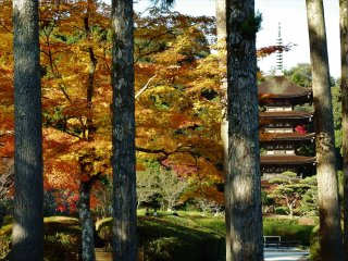 Rurikoji's pagoda dates back to 1404 and was built by the feudal lord of Yamaguchi, Moriharu Ouchi, in commemoration of the death of his brother, Yoshihiro.